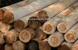خشبيّة [بيلينغ مشن] منزل سجلّ مقياس سرعة مخرطة