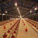 Дом цыпленка нового сельскохозяйственного строительства цыпленка поставщика конструкции хорошего коммерчески