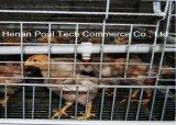 熱い小さい養鶏場電池ケージのおりの自動装置か風邪は浸した電流を通された鋼線(タイプ)を