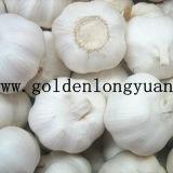 Neues Getreide-frischer weißer Knoblauch Globalgap bestätigt