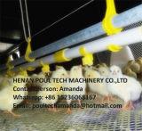 Chicken Farmのための家禽Farm Broiler Chicken Flooring Raising System