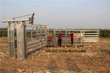 牛はHeadhole/ヘッドクラッシュのHeadlock押しつぶしたり/牛ハンドラ