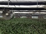 Ventilatore del cono della vetroresina/ventilatore Camera di pollo