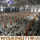 Nuova Camera di pollo facile del materiale da costruzione della costruzione dell'acciaio per costruzioni edili dell'installazione