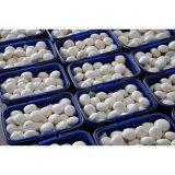 새로운 작물 좋은 가격 샴피뇽에 의하여 통조림으로 만들어지는 버섯
