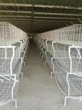 La carne y la avicultura Equipo