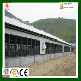 Solas granjas prefabricadas del marco de acero de la historia