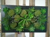Novela Art Frame Pared con plantas artificiales
