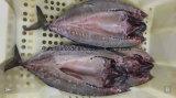 جديد يهبط يجمّد سمكة مسالمة إسقمري فواكه البحر