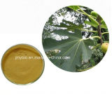 Flavon-5:1-10:1 Feige-Blatt-Auszug der Fertigung-natürlicher 10%