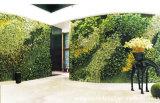 2017 Uso uso al aire libre de interior artificial verde pared para la decoración