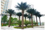 Пальмы даты даты украшения сада пальма кокоса искусственной напольная