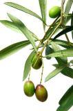 100% طبيعيّ زيتونيّ اللّون ورقة مقتطف مع [أليوروبين] 4%~60% [هدروإكستروسل] 1%