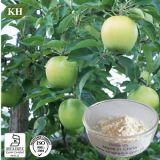 Cosmetical Ingrediant Phloretin 98% extrato de raiz da Apple