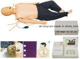 教授モデル、X-Y2000基本的な看護の人体摸型