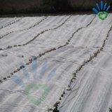 Nichtgewebtes Film-niedrige Kosten-landwirtschaftliches Gewächshaus-Material für Tomate