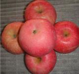 Vers Fruit FUJI in China in Uitstekende kwaliteit in de Lage Rode Ster Roze Lady> van Huaniu van het Feest van Price<FUJI Qinguan