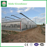 野菜か庭または花または農場のマルチスパンのプラスチック温室