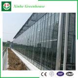 Serres chaudes en verre d'agriculture/film publicitaire/jardin avec le système de refroidissement