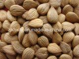 Almond dolce (youyi 680 PCS/500g)