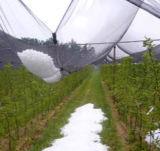 Protection contre la grêle Mesh Whosale Fournisseur d'oiseaux en plastique de la sécurité de l'Agriculture Net