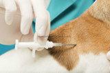 Tag de vidro barato da cápsula da microplaqueta RFID de 125kHz/134kHz Em4305 micro para o animal