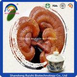Надувательство Ganoderma Lucidum фабрики оптовое горячее