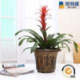 Ahorra un 10% de la muestra libre de alta calidad de latón cepillado plantas ornamentales pintura de la flor de plástico Macetas Macetas