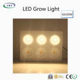 I chip LED del CREE si sviluppano chiari per le piante d'appartamento & i fiori