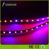 12V 60 colore rosso-chiaro e blu LED della striscia tester/del LED 5m/Roll LED coltivano la striscia chiara