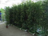O zoneamento de hedge de bambu decorativas