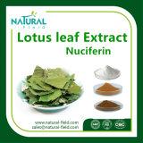 Polvo /Nuciferine el 2% del extracto de la hoja del loto; el 20% el 50%, el 98%