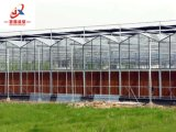 야채와 꽃 설치를 위한 Venlo 유리제 온실