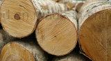 A película industrial Eco-Friendly e vertical enfrentou a madeira compensada para a construção