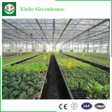 Estufas inteligentes do policarbonato para Growing vegetal