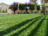 Home Decoration를 위한 U Shape 정원 Synthetic Artificial Grass Turf
