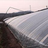 Estilo chinês do sol de gases com efeito de crescimento vegetal