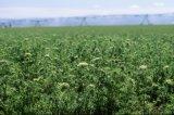 Großes Ackerland-Mitte-Gelenk-Bewässerungssystem
