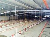 Casa y equipo de la granja de pollo de las aves de corral de la capa del edificio de la estructura de acero de la alta calidad