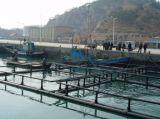 正方形の栽培漁業の純ケージ