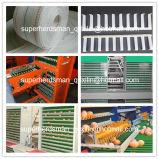 Système de la cage de poulet de volailles d'équipements agricoles