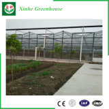 Het plantaardige Groeien de Intelligente Serre van het Glas