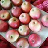 Superiore di Qinguan fresco Apple