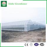 Земледелие/дом коммерчески тоннеля полиэтиленовой пленки зеленая для клубники/Rose