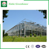 Serra del giardino galvanizzata assicurazione commerciale del blocco per grafici d'acciaio/serra Victorian di vetro da vendere