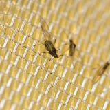 Meyabondの100%年のHDPEの農業の反昆虫の網の温室のネット
