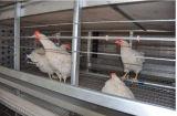 As aves domésticas automáticas da galinha do grande projeto prendem o equipamento de exploração agrícola para o frame da galinha H de /Breeding do reprodutor