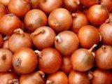 Gelbes Onion von New Harvest Crop Supplier