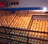 L'énergie solaire de l'autruche incubateur d'oeufs à couver des oeufs