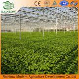 농업 야채를 위한 다중 경간 폴리탄산염 장 온실